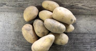 EARL Langevine - Pomme de terre CONSOMMATION variété Charlotte BIO 4kg