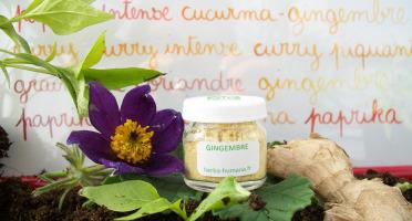 HERBA HUMANA - Gingembre Bio Cultivé en France 3 g