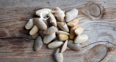 Camargue Coquillages - Tellines De Camargue - Pêche Durable Et Responsable