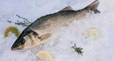 Côté Fish - Mon poisson direct pêcheurs - Loups 500g
