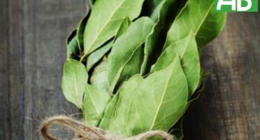 La Boite à Herbes - Laurier Frais - Botte 50g