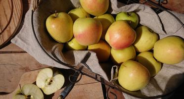 Le Verger de Crigne - Pommes Golden Bio (grand Calibre) - 10kg