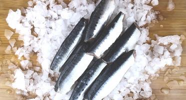 Qwehli - Sardine - filets papillon