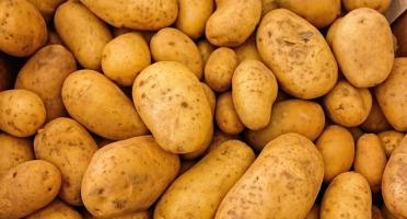 Le Châtaignier - Pommes De Terre Agatha - 15kg