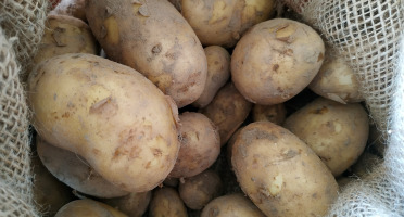 Au Champ - Les bio p'tits légumes - Pomme de Terre Bernadette Bio - 5kg