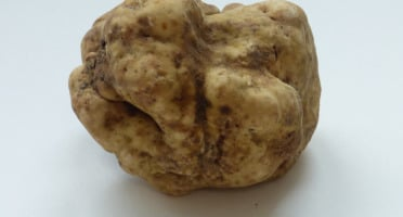 ALENA la Truffe d'Aquitaine - Truffe blanche (Truffe d'Alba) Tuber Magnatum Pico - 20g