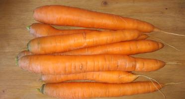 Au Champ - Les bio p'tits légumes - Carottes Nantaises Bio - 3 kg