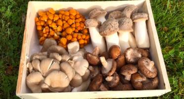 Les champignons du Loc'h - Panier découverte 1kg - 4 variétés