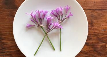 Le Jardin des Antipodes - Fleurs De Tulbaghia