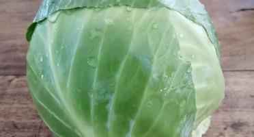 Micro-Ferme de Carcouet - Choux Verts Lisses Bio - 3 kg