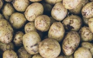 Julien Bouche - Maraîcher Bio - Pommes De Terre Variété Blanche 5kg