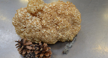 Trapon Champignons - Sparassis Crépu - 1kg