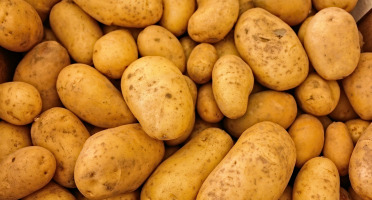 Le Châtaignier - Pommes De Terre Agatha - 6 Kg