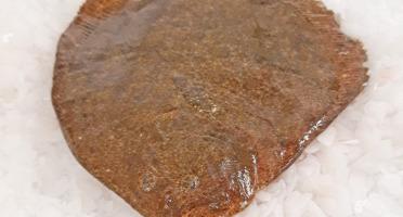 Le Panier à Poissons - Barbue Vidée 2kg