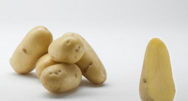 Maison Bayard - Pommes De Terre Charlotte - 5kg