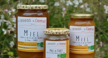 Les Butineuses de Champigny - Miel de Forêt Bio - 250 g