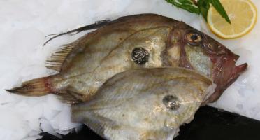 Pêcheries Les Brisants - Ulysse Marée - Saint Pierre - Prêt À Cuire - Lot De 1kg