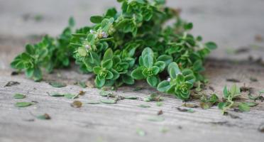 La Boite à Herbes - Thym Citron Bio - 100g