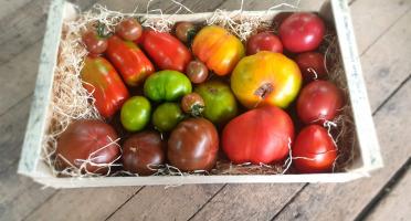 EARL Langevine - Tomate Population Cuor Di Bue (cœur De Bœuf) 4kg