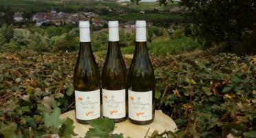 Sancerre Doudeau-Leger - Vent d'Ange - Vin de Pays du Val de Loire Blanc IGP 2019 - 3 Bouteilles