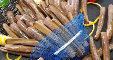 Poissonnerie Le Marlin - Couteau - 1kg