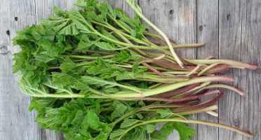 L'herbandine - Berce – Jeunes Pousses - 50 g