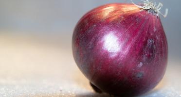 Le Châtaignier - Oignons Rouges - 1kg