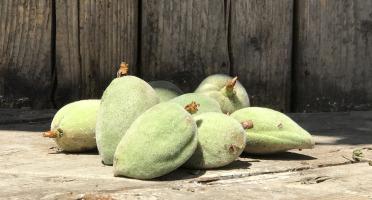 La Boite à Herbes - Amandes douces bio 1kg