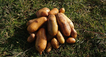 La Ferme Boréale - Pommes De Terre Belle De Fontenay Calibre 28-35 - 3kg