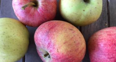 Ferme du Mont de Cuy - Pommes Mélange Rubinette, Cox's Et Chantecler - 2kg