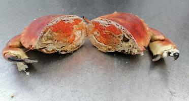 Les Viviers de Porsguen - Tourteau scié cuit à l'eau de mer - 600 g