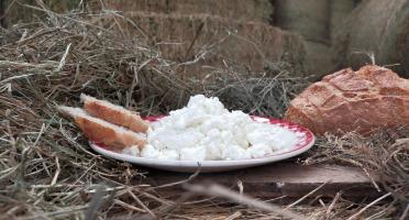 La ferme Lassalle - Greuil de Brebis