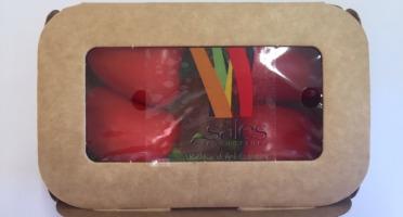 Maison Sales - Végétaux d'Art Culinaire - 20- Mini Poivron Rouge - 4 Pièces