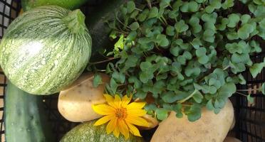 Les Jardins du Mas de Greil - Panier de légumes frais