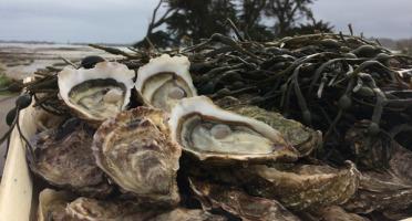 Les Huîtres Chaumard - Huîtres De Paimpol N°2 - Bourriche De 36 Pièces (3 Douzaines)