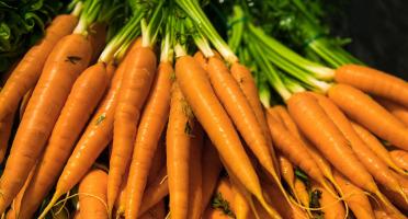 Maison Argentain - Mini-carotte Botte