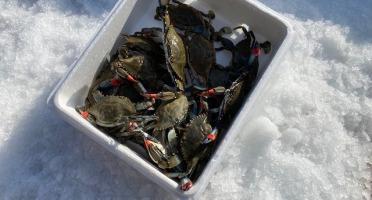 Pêcheurs Toni & David Micheau - Caissette Crabe bleu 4 kg