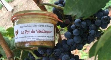 Des Poules et des Vignes à Bourgueil - Le Pot Du Vendangeur