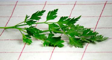 La Boite à Herbes - Persil Plat Frais - Sachet 50g