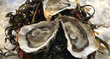 Huîtres Le Priol - Huîtres Creuses De Bretagne N°2 - Bourriche De 50