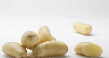 Maison Bayard - Pommes De Terre Celtiane - 5kg