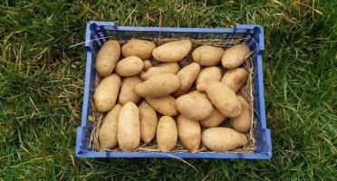La Ferme Boréale - Pomme De Terre Spunta Calibre - De 35 - 10kg