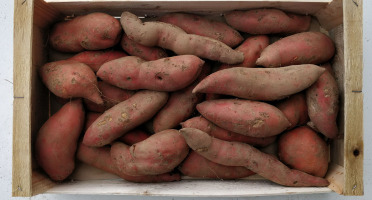 EARL Langevine - Patate Douce 1kg