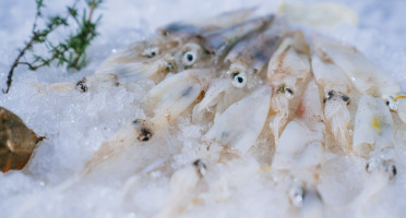 Côté Fish - Mon poisson direct pêcheurs - Piste