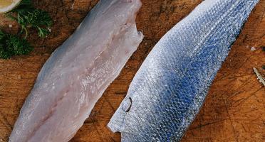 Côté Fish - Mon poisson direct pêcheurs - Filets De Loup 300g