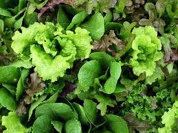 Le Jardin des Gallines - Salade Épluchée En Mélange