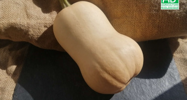 Micro-Ferme de Carcouet - Butternut Bio - 3 kg
