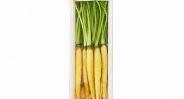 Maison Sales - Végétaux d'Art Culinaire - -3- Mini Carotte Jaune - 12 Pcs Minimum