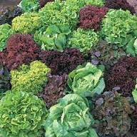 Le Jardin des Gallines - Salade du moment - Pièce