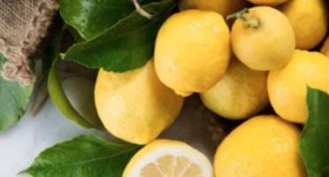 La Maison du Citron - 8 Kg Citrons De Menton Igp Bio